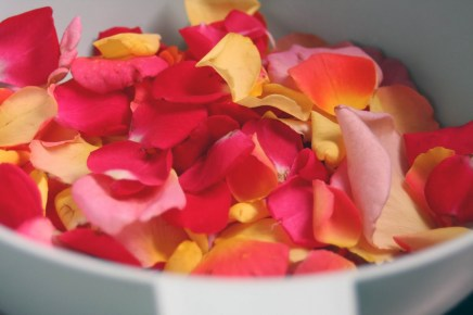 rose petal jelly 6